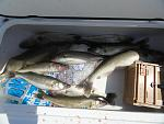 Walleye Fever Woreked hard 7 14 12 012