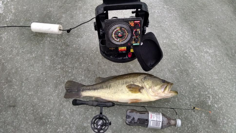 Indian Largemouth and Vex