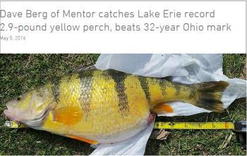 New Lake Record Perch?-lake-record-perch-jpg