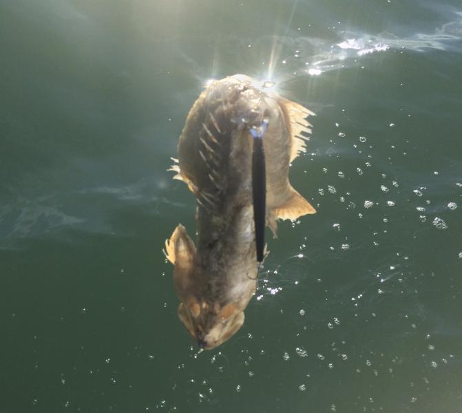 Sunday's frustration (hint no fish and stable flies)-6810da20-0b22-49f6-905c-d0485ec4b03e-jpg