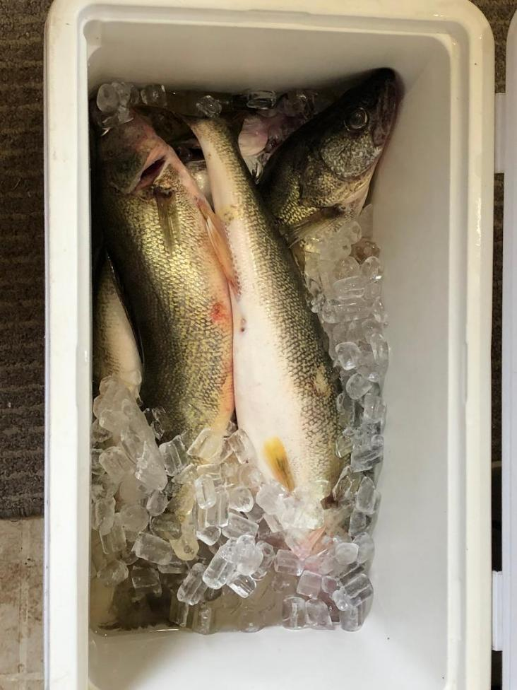 Fishing report from Sheffield Lake Launch Ramp, 7-23-fish-jpg