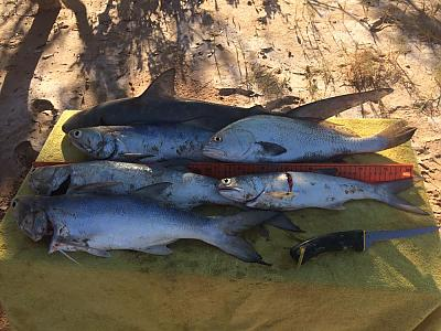 Salmon at Pardoo Station